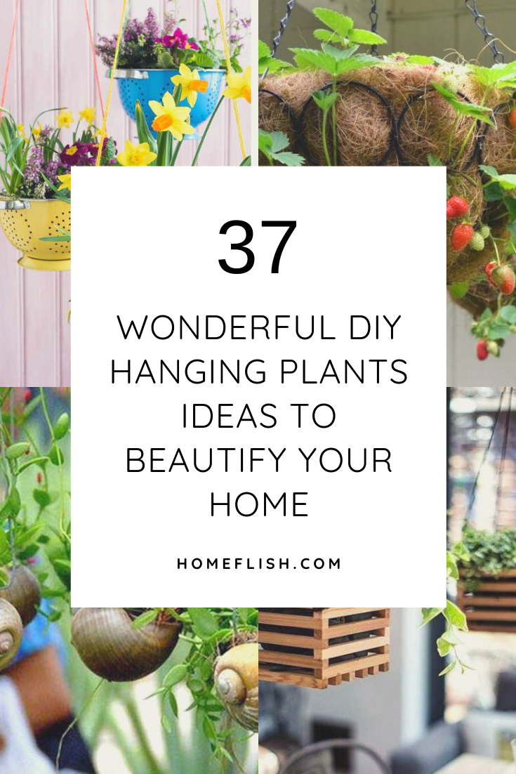 Diy Hanging Plants Ideas To Beautify